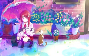 original characters, flowerpot, plants, flowers, puddle, umbrella