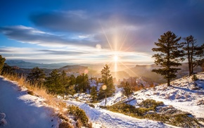 landscape, forest, winter