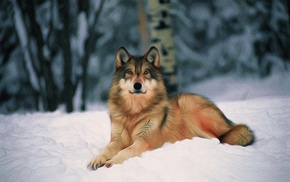 forest, wolf, snow