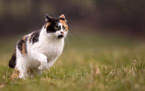 grass, animals, depth of field, running, cat