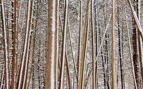 branch, nature, snow, forest, trees, winter