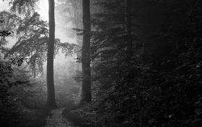 landscape, monochrome, morning, shrubs, trees, forest