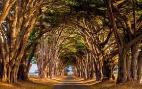 road, nature, tunnel, trees, landscape, daylight