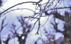 trees, depth of field, twigs, nature