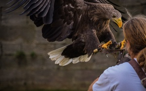 nature, Germany, animals, eagle, photography