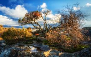 shrubs, landscape, sunlight, puddle, nature, clouds
