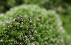moss, macro, nature, green