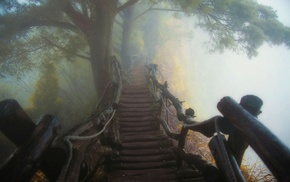 atmosphere, trees, path, wooden surface, mist, landscape