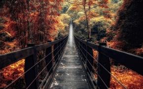 trees, nature, landscape, bridge, bamboo, fall