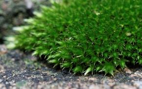 macro, nature, green, moss