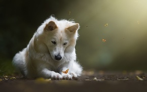 dog, butterfly