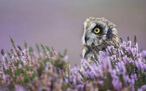 birds, depth of field, bird of prey, animals, owl, flowers