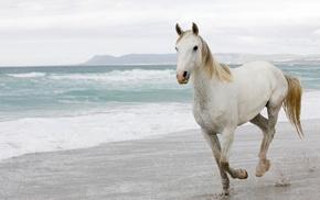 beach, horse