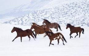 horse, neige