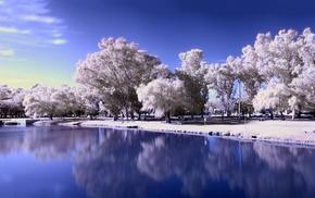 trees, landscape, frozen lake, winter, lake, snow
