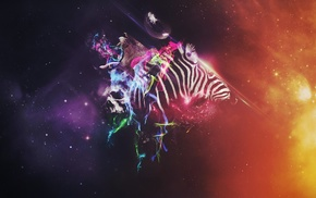 zebras, Photoshop, animals, colorful