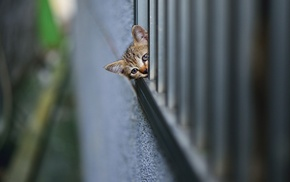 wall, animals, fence, kittens, depth of field, baby animals