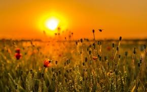 flowers, plants, Sun, landscape