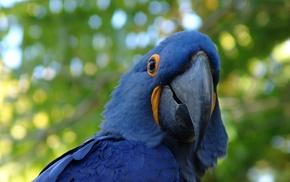 parrot, animals, macaws, birds