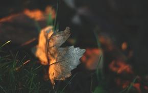 depth of field, macro, leaves