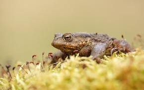 macro, amphibian, animals