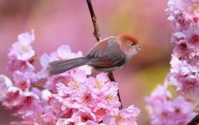 animals, flowers, pink flowers, birds