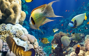 underwater, fish, coral, animals