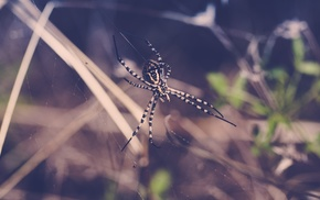animals, spider