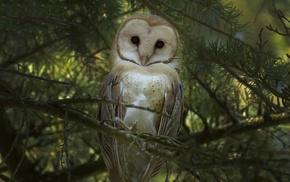 forest, animals, birds, owl