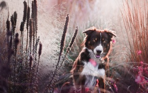 dog, nature, animals, depth of field, reeds