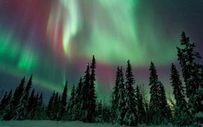 pine trees, landscape, snow