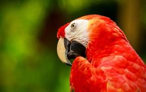 birds, animals, macaws, parrot