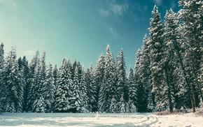 nature, pine trees, snow