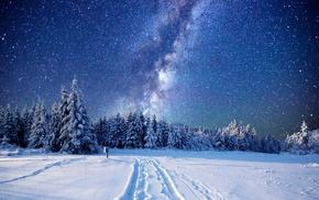 pine trees, snow, stars, landscape