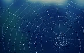 water drops, spiderwebs, spider