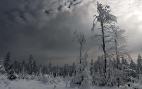 nature, snow, landscape, winter