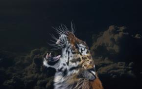 clouds, animals, sky, big cats, tiger