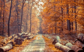 fall, road, log, forest