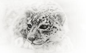 white, face, white tigers, tiger, closeup