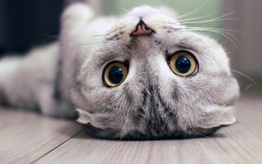 cat, upside down, baby animals, pet, kittens, depth of field