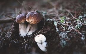 nature, blurred, tilt shift, mushroom, macro, closeup