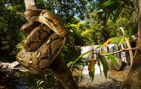 snake, animals