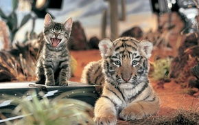 baby animals, tiger, animals, cat