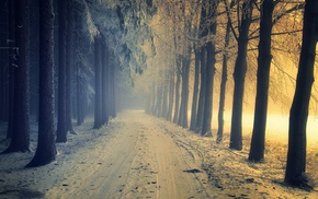 cold, sunlight, forest, dirt road, winter, trees
