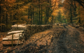 fall, trees, forest, dirt road, leaves, firewood