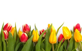 plants, colorful, nature, tulips, flowers, spring