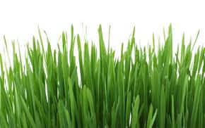 texture, plants, nature, green, closeup, leaves