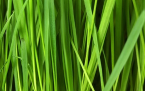 nature, pattern, grass, texture, plants, abstract