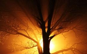gold, orange, old, black, bright, mist
