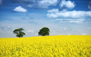 blue, trees, landscape, Rapeseed, yellow, sky